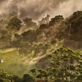 Spicers Clovelly Estate Wedding Scape Photograph in the mist and